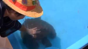 ゆたぼんとウミガメ